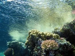 red-sea-Diving -Hurghada-Egypt4