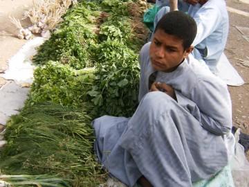 fruit and vegetable market-in-luxor-Egypt2