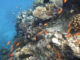 red-sea-marsa-alam